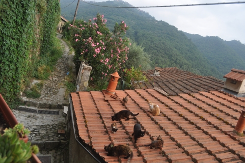 Cats of Apricale