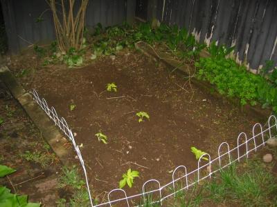 Original garden, also circa 2009